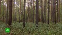 Как лесники сохраняют зеленое богатство России