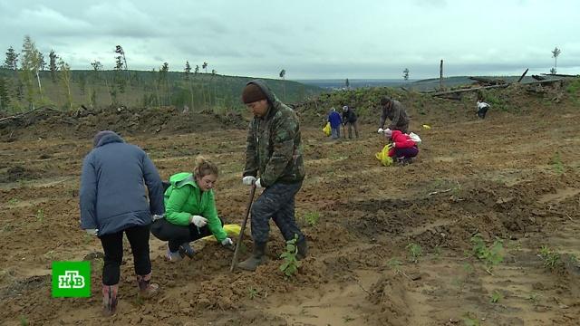 «Сохраним лес»: кампания по высадке деревьев приобрела федеральный масштаб.лес, лесные пожары.НТВ.Ru: новости, видео, программы телеканала НТВ