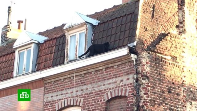 Французов напугала гуляющая по крышам изаглядывающая вокна пантера.Франция, животные.НТВ.Ru: новости, видео, программы телеканала НТВ