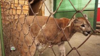 Жертвы жадности ижестокости: как живут покалеченные человеком звери