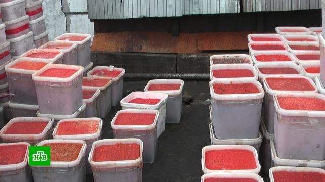 Под Магаданом нашли начиненные красной икрой гаражи.браконьерство, икра, Магаданская область.НТВ.Ru: новости, видео, программы телеканала НТВ