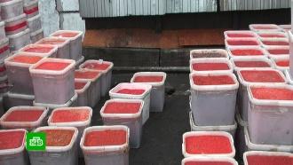 Под Магаданом нашли начиненные красной икрой гаражи