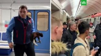 Вмосковском метро спасли упавшего на рельсы котенка
