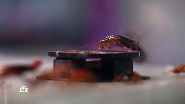 Новейшие средства против тараканов: что реально работает.изобретения, насекомые, технологии.НТВ.Ru: новости, видео, программы телеканала НТВ