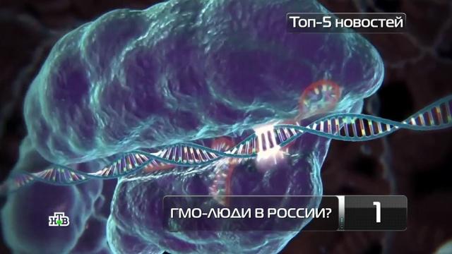 В России могут появиться ГМО-люди.генетика, здоровье, медицина, наука и открытия.НТВ.Ru: новости, видео, программы телеканала НТВ