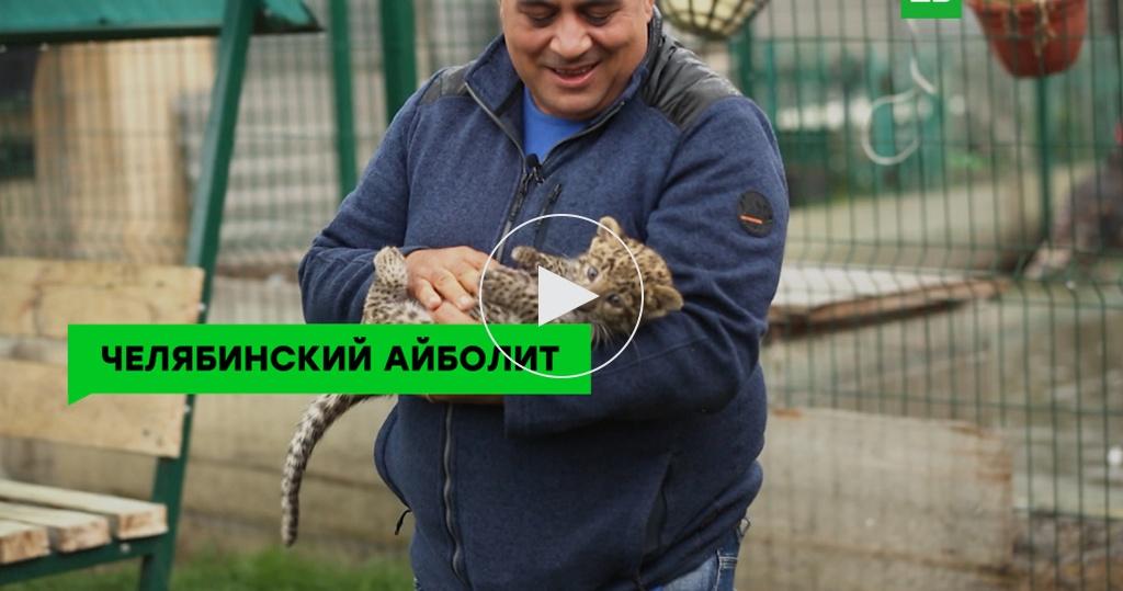 Ветеринар из Челябинска спас десятки животных, пострадавших от рук человека