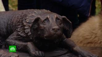 В «Музеоне» открыли памятник бездомным животным