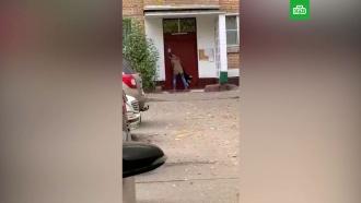 Московская дрессировщица избила собаку
