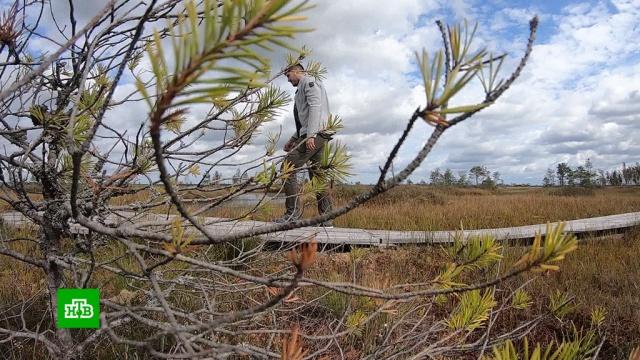 Белорусское болото бьет рекорды по посещаемости туристами.Белоруссия, отдых и досуг, туризм и путешествия.НТВ.Ru: новости, видео, программы телеканала НТВ