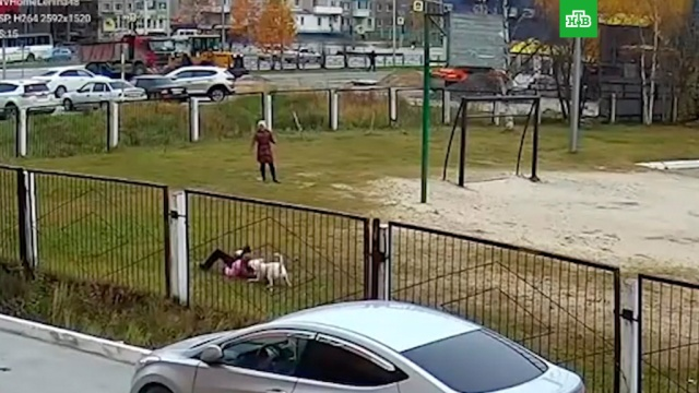 Бультерьер потрепал девочку возле школы.ХМАО/Югра, дети и подростки, животные, нападения, собаки, школы.НТВ.Ru: новости, видео, программы телеканала НТВ