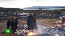 Ученые не поддержали идею отстрелить 500 заповедных камчатских медведей