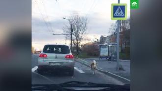 ВЧувашии женщина выгуляла собаку, не выходя из машины