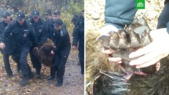 Бегавшего по улицам медведя поймали в Чебоксарах