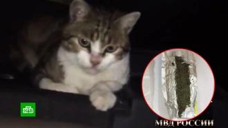 В Подмосковье кот-наркокурьер сбежал до суда