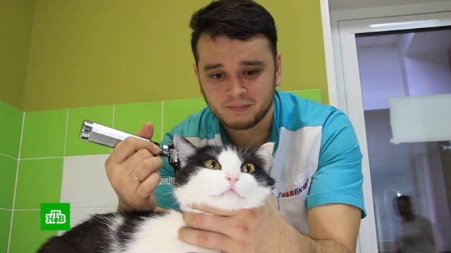 Зоозащитница пожаловалась на ветеринара, спасающего животных от эвтаназии.Челябинск, животные, ветеринария.НТВ.Ru: новости, видео, программы телеканала НТВ