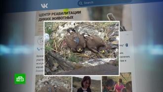 «Мегафон» простит долг орлицы, разорившей сибирских орнитологов