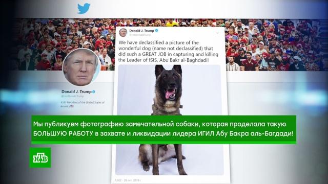 Трамп рассекретил боевого пса, который загнал вугол аль-Багдади.США, Трамп Дональд, животные, собаки, терроризм.НТВ.Ru: новости, видео, программы телеканала НТВ