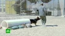 Трамп пригласил вБелый дом собаку— участницу ликвидации главаря ИГ