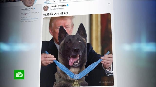 Трамп опубликовал фото ссобакой иопозорился.животные, Сирия, терроризм, собаки, Пентагон, США, Исламское государство, Трамп Дональд.НТВ.Ru: новости, видео, программы телеканала НТВ