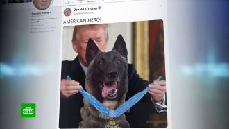 Трамп опубликовал фото ссобакой иопозорился