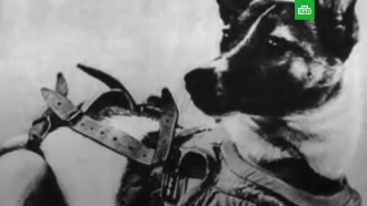 Полет игибель первой <nobr>собаки-космонавта</nobr>