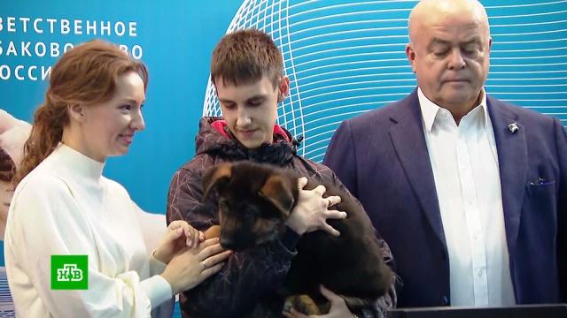 Горюющему по погибшему щенку подростку из Томска подарили собаку.ДТП, Томск, дети и подростки, скандалы, собаки.НТВ.Ru: новости, видео, программы телеканала НТВ