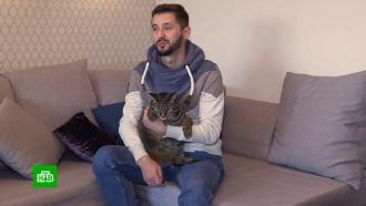Толстый кот сел на диету после инцидента ваэропорту Шереметьево