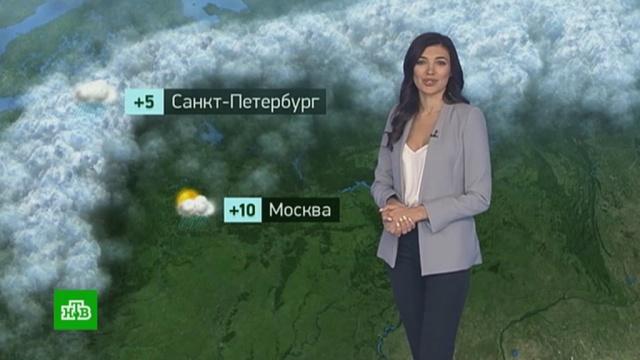 Утренний прогноз погоды на 11ноября.погода, прогноз погоды.НТВ.Ru: новости, видео, программы телеканала НТВ