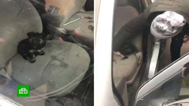 В Сибири спасли закрытого в автомобиле замерзающего щенка.Красноярск, животные, собаки.НТВ.Ru: новости, видео, программы телеканала НТВ
