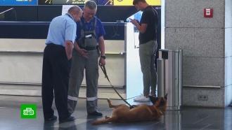 Российские аэропорты попросили избавить от бомбоубежищ и собак