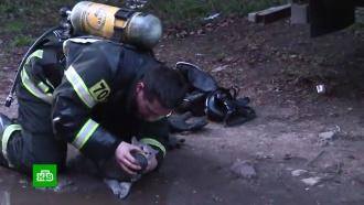 Пожарные реанимировали надышавшегося угарным газом кота