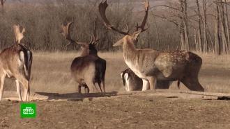 ВРостовской области выпустили вестественную среду два десятка молодых оленей иланей