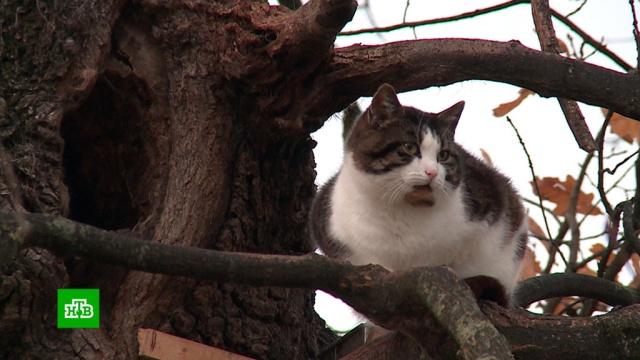 Путь отшельника: кот Борис уже 7лет живет на дереве.Польша, животные, кошки, курьезы.НТВ.Ru: новости, видео, программы телеканала НТВ