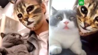 Кошачьи фильтры для соцсетей перепугали домашних питомцев