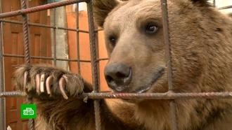 Бездомный медведь Афанасий нашел жилье благодаря Интернету