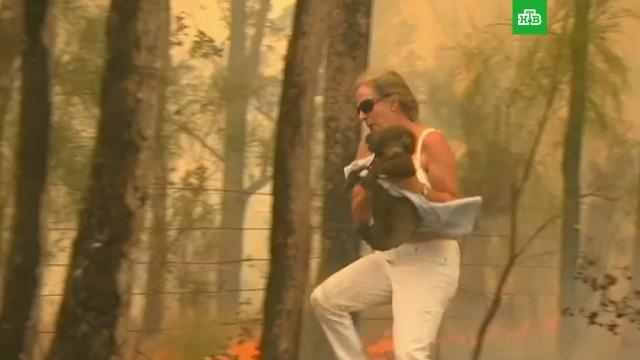 Австралийка бросилась в огонь ради спасения коалы.Австралия, животные, лесные пожары.НТВ.Ru: новости, видео, программы телеканала НТВ
