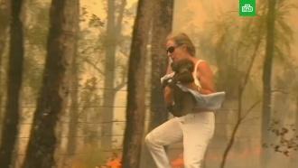 Австралийка бросилась в огонь ради спасения коалы