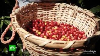 Биржевые цены на кофе подскочили на 25%