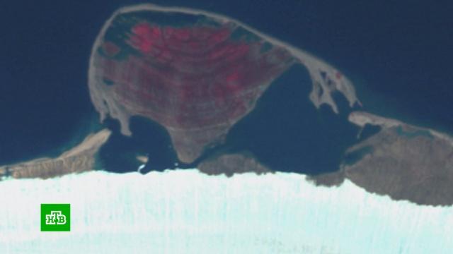 Школьники из Чувашии открыли новый остров в Арктике.география и топонимика, наука и открытия.НТВ.Ru: новости, видео, программы телеканала НТВ