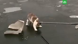 Прохожие спасли кота спримерзшими ко льду лапками