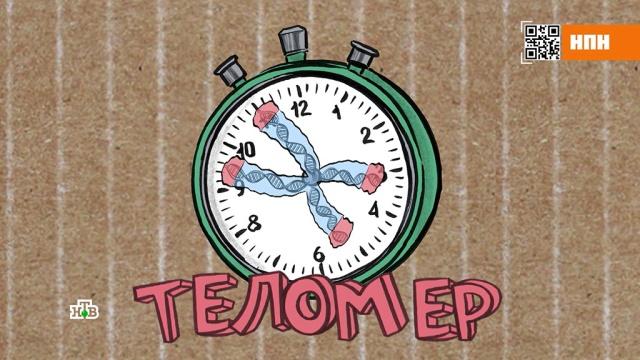 Как замедлить наступление старости.болезни, здоровье, медицина.НТВ.Ru: новости, видео, программы телеканала НТВ