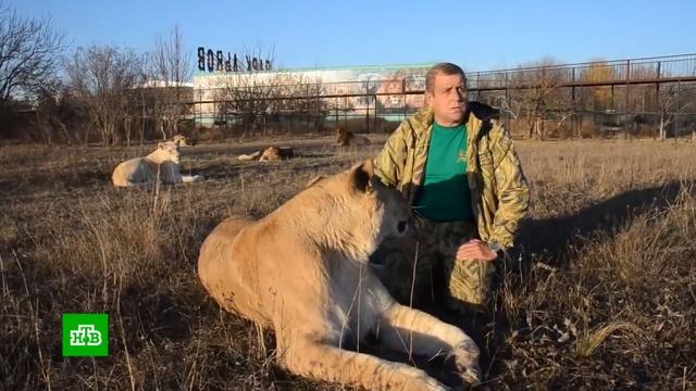 Владелец крымского сафари-парка пригрозил убить животных из-за постоянных проверок.ветеринария, животные, налоги и пошлины, медведи, львы, рейдерство, зоопарки, Запашные, суды, Крым, аресты, приговоры.НТВ.Ru: новости, видео, программы телеканала НТВ
