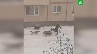 Житель Североуральска чудом спасся от своры собак