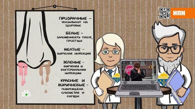 Какого цвета ваши сопли: безопасное лечение насморка.болезни, здоровье, медицина.НТВ.Ru: новости, видео, программы телеканала НТВ