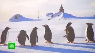 Азарт, пингвины изагар: самые яркие моменты полярной выставки РГО