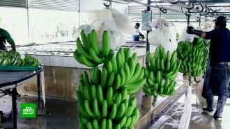 Россияне перед Новым годом могут остаться без бананов