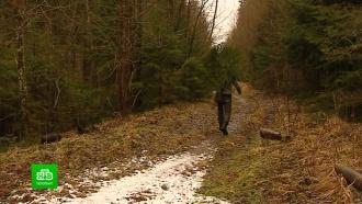 Петербуржцев ждут вЛенобласти за бесплатными елками