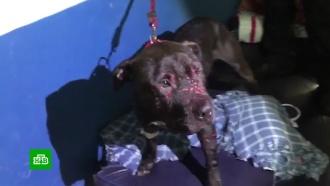 Организаторов собачьих боев в Бразилии накрыли во время схватки