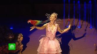 Львы и попугаи сыграют новогоднюю сказку в цирке на Фонтанке