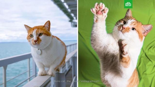 Составлен рейтинг самых популярных котов десятилетия.Интернет, кошки, социология и статистика.НТВ.Ru: новости, видео, программы телеканала НТВ
